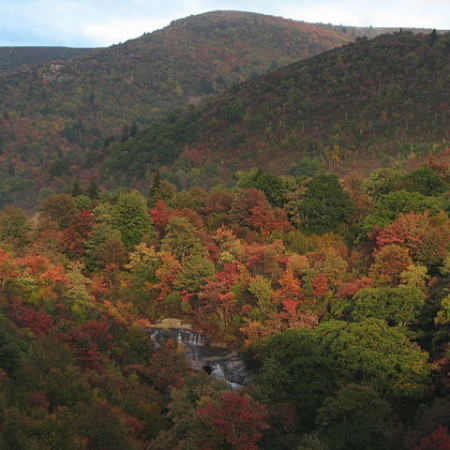 640px-Black_Balsam_Knob_in_autumn-2